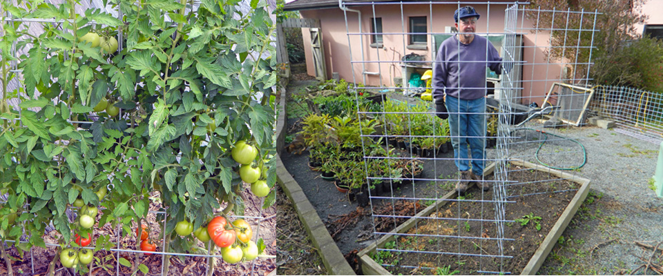 Bean & Tomato Fencing